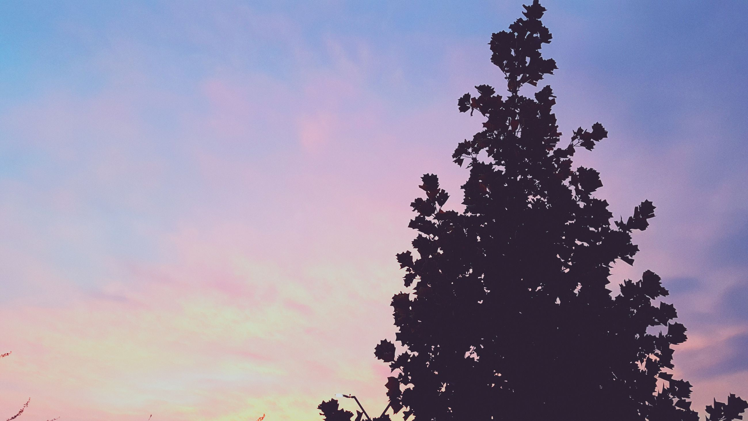 sunset, sky, nature, tree, beauty in nature, silhouette, no people, outdoors, astronomy, day