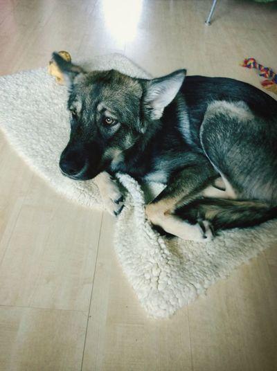 Dog affraid of vacum cleaner