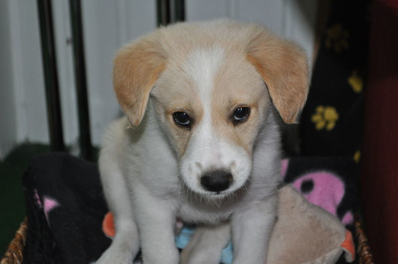Close-up portrait of cute puppy at home