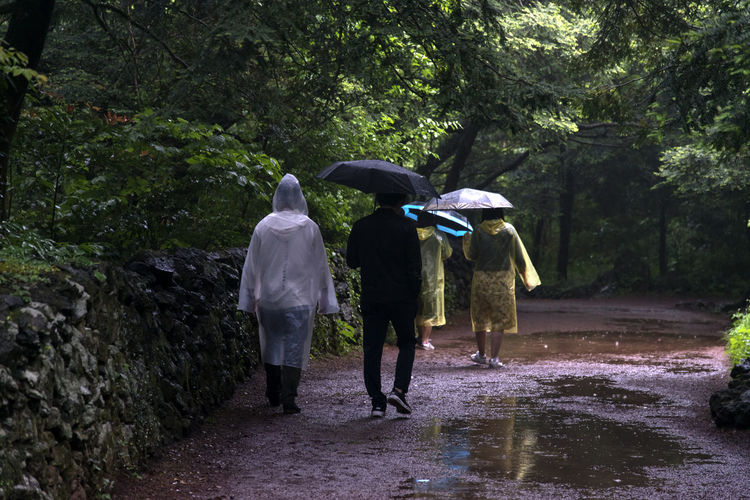rainy day of Bijarim which is a famous forest in Jeju Island, South Korea Adult Bijarim Day Forest Full Length JEJU ISLAND  Lifestyles Men Nature Outdoors Pathway Rain Rainy Rainy Season Real People Rear View Shelter Three People Togetherness Tree Under Walking Water Wet Women