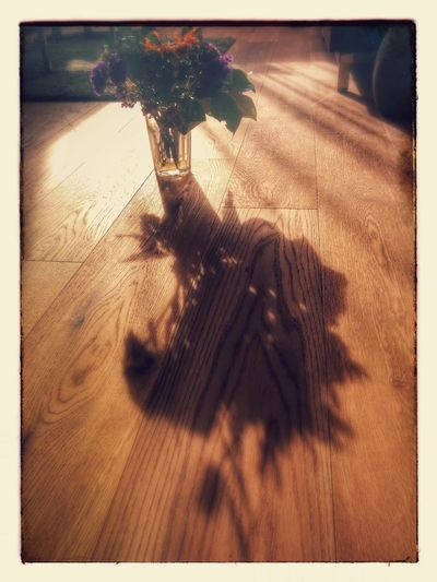 a little experiment at home with Shadows & Lights Eye Em Best Shots Creative Light And Shadow EyeEm Flower