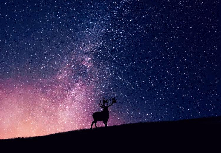 Silhouette reindeer on field against glowing constellation in sky