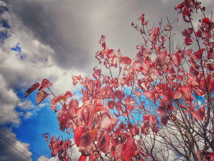 Red Sky No