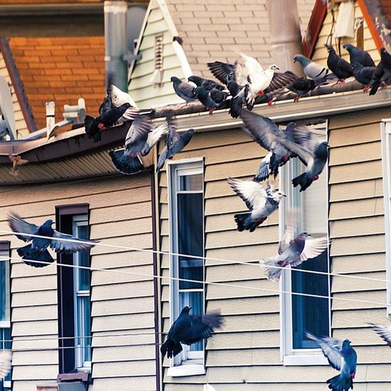 The Neighbor is going to the Birds