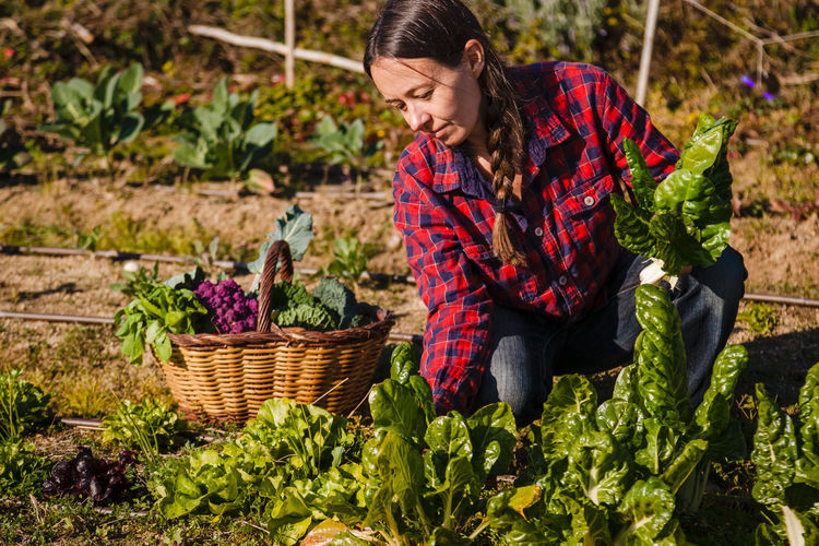 Midsection of woman holding basket in farm