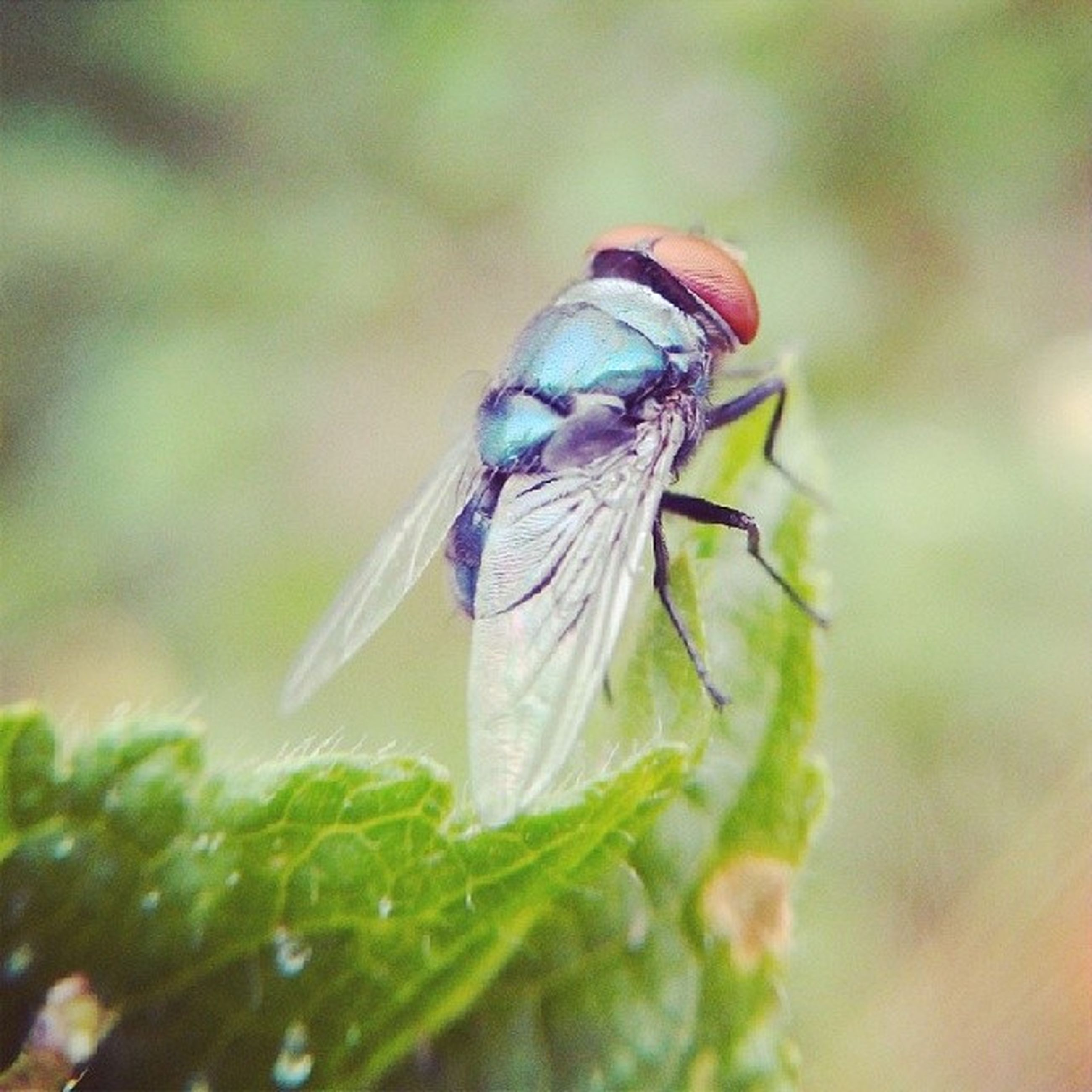 one animal, insect, animals in the wild, animal themes, wildlife, close-up, selective focus, focus on foreground, nature, leaf, green color, beauty in nature, day, outdoors, plant, zoology, no people, full length, animal antenna, dragonfly