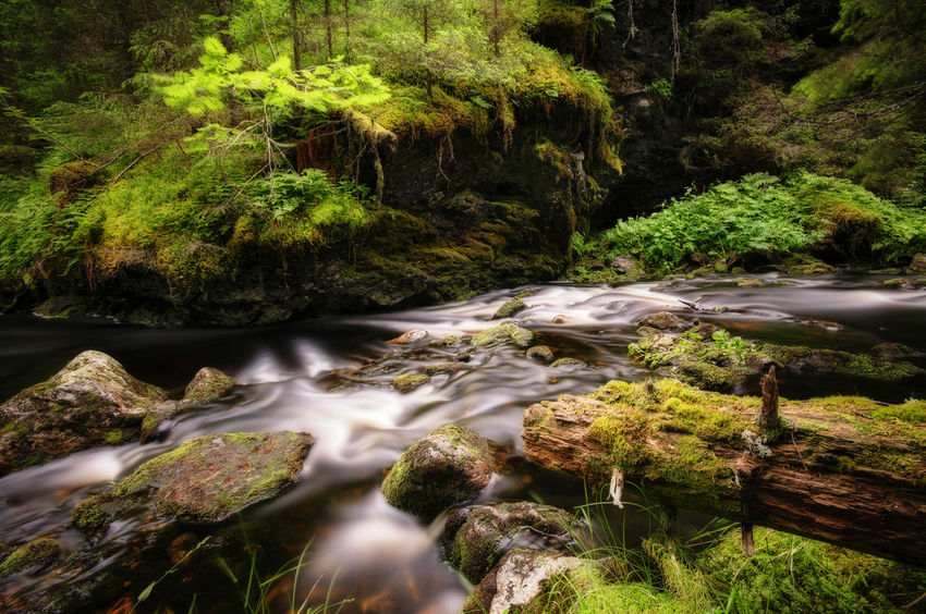 River moss Green Jamtland Klövsjö River Motion Blur Log Trees Rocks Plants Water Nature Outdoors No People Beauty In Nature Moss Tranquil Scene Green Color Scenics Forest Growth Tranquility