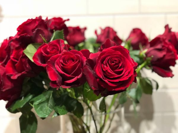 Red as rose Roses🌹 Rosé Flower Rose - Flower Fragility Red Petal Beauty In Nature Freshness Close-up Bouquet Focus On Foreground Indoors  Plant Nature Flower Head No People Day Growth