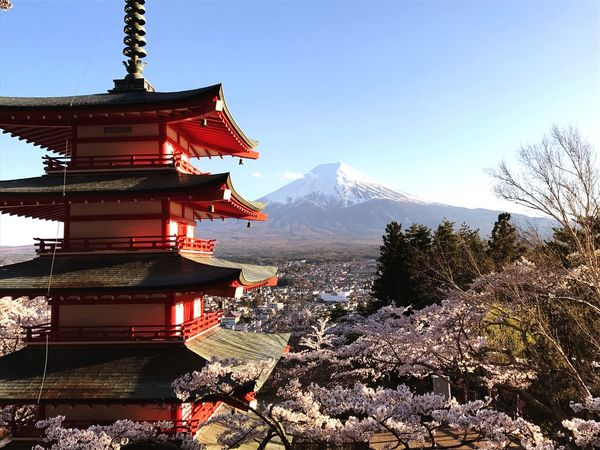 Cherry Blossom Japan Mt Fuji Mountain Snow Winter Mountain Range Religion Nature Outdoors Snowcapped Mountain Sky Landscape Beauty In Nature