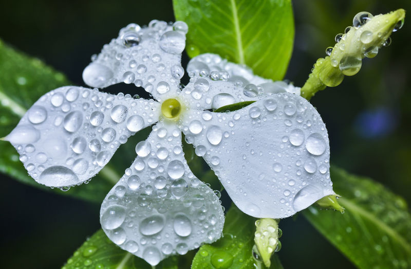 Close-Up Of Water Drops On Wet Leaves
