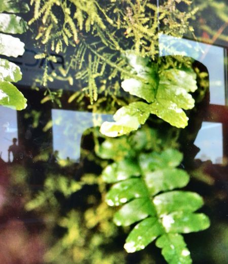 I'm studying to take a picture of abstraction Leaf Abstract Green Color Reflection Contemporary Double Exposure