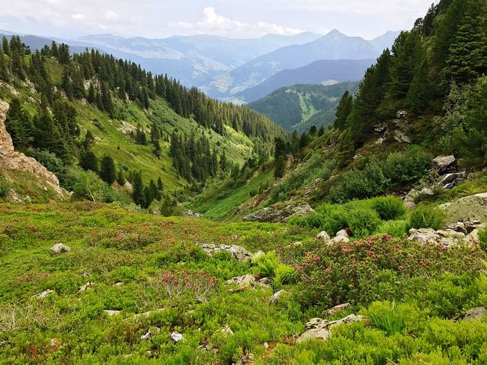 France Alps Valley Nature Mountain Beauty In Nature Growth Green Color Day Tranquility Outdoors Scenics No People Landscape Grass