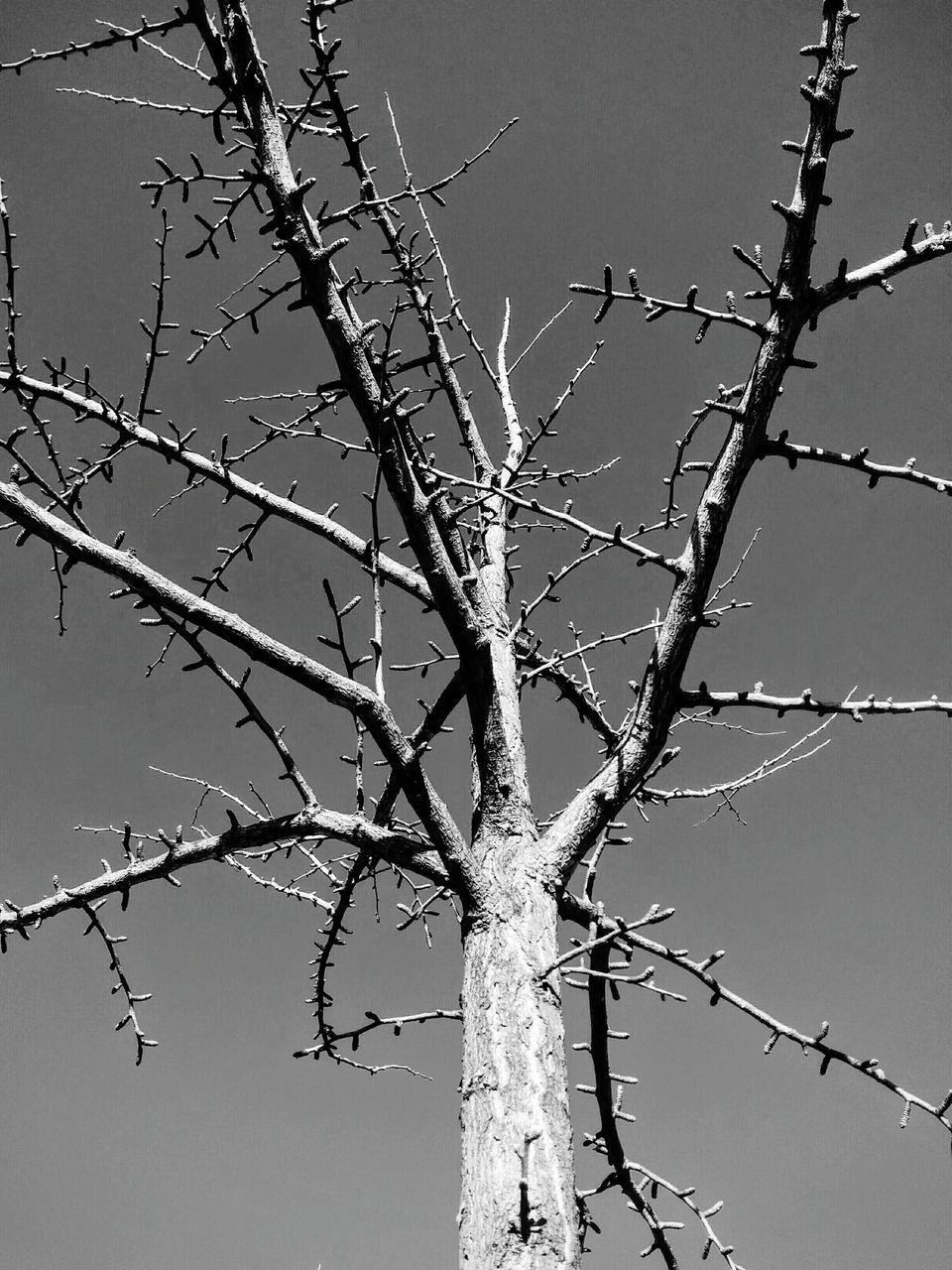 branch, day, outdoors, bare tree, nature, no people, tree, low angle view, beauty in nature, clear sky, sky