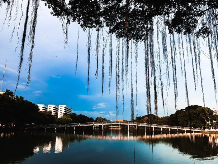 Water Tree Sky Plant Nature No People Reflection Low Angle View Tranquil Scene Waterfront Beauty In Nature Outdoors Built Structure Cloud - Sky Lake Architecture Tranquility Day