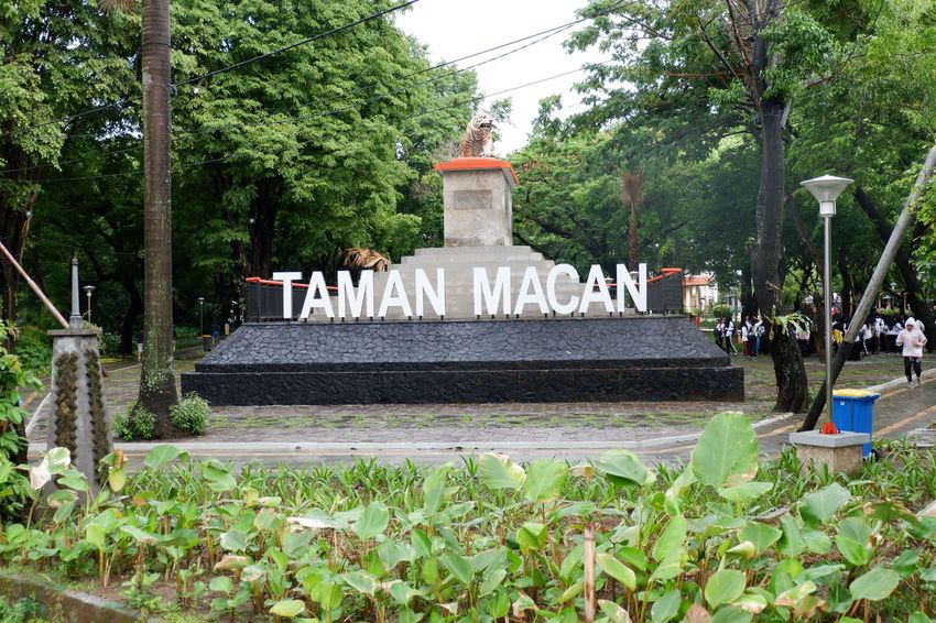 This is TIGER PARK, but no tigers there...😆 because this is one of park for doing some excersice, jogging, etc in Makassar... 😉 Tamanmacan Makassar INDONESIA Nature Park Excersice Jogging Running Taman Workout Olahraga Fit Healthy Strong Photo Photoshoot Photooftheday Like4like Likealways Followme Likeit