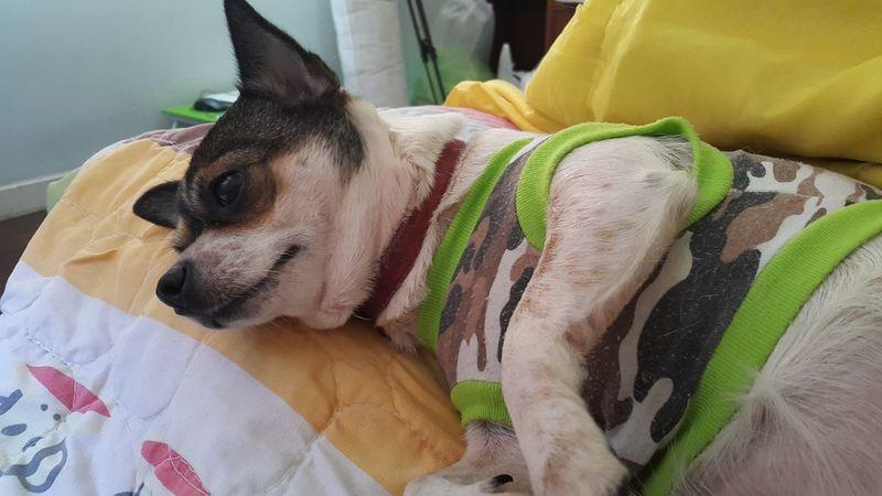 Poor dog Pet My Best Friend Animal Bed Indoors  Dog. Sleep Yellow Sad Dog Dog Fashion Wood Hair Dog Dog