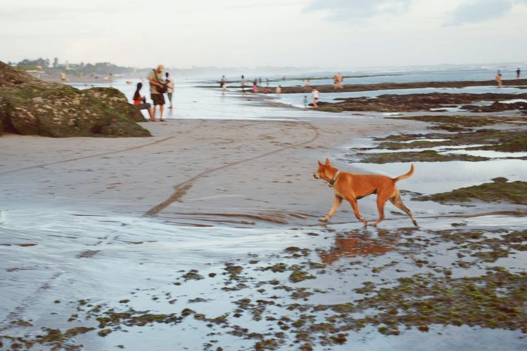 Protecting Where We Play Dog❤ Waves, Ocean, Nature Bali, Indonesia Ocean View Sunset_collection Canggu On The Beach The Week Of Eyeem Deceptively Simple