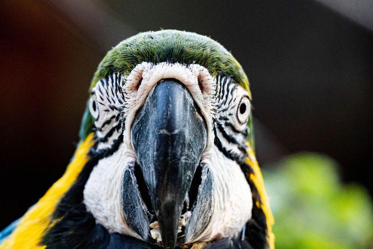 Close-up portrait of a parrot
