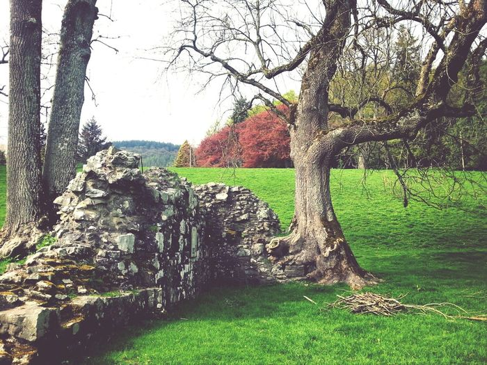 lovely day at Abbey Cwm Hir today... Ruins Trees Wales Abbey