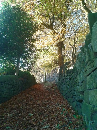 Autumnbeauty Tranquil Scene Outdoors Sunset Shadow Scenics Sunlight Beauty In Nature Autumnleaves Pathway Tranquility Tree Trunk Autumnbeauty Autumn Leaves Landscape Leaves No People Day Nature Pathways Drystonewalls Growth Beauty In Nature