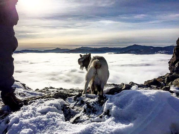 Beauty In Nature Scenics Cold Temperature Domestic Animals Landscape Animal Themes Mammal Nature Winter One Animal Outdoors Snow Animal Cloud - Sky Beauty Sunset Sky No People Day Pets