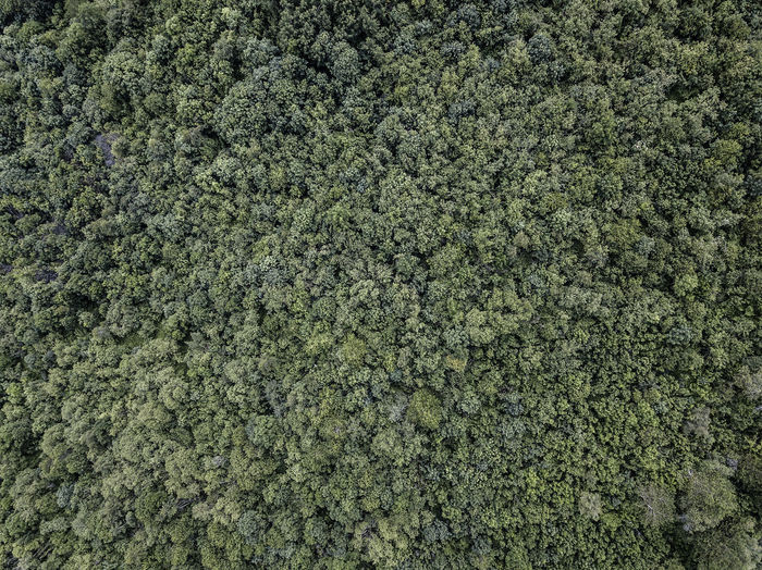 An alpine forest photographed from the sky (Piedmont, Italy) Forest Photography Green Color Backgrounds Plant High Angle View Beauty In Nature Coniferous Tree Foliage Land Tranquility Outdoors Pattern Textured  Nature Dronephotography Drone  Tree Abundance Fir Tree Growth No People Piemonte Italy EyeEm Nature Lover Aerial View