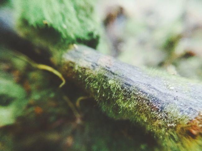 macro Macro ảnh đẹp Thức ăn EyeEm Selects ảnh Lạnh Hoa Food Stories Nước So Deep Khói May Macro No People Outdoors Day Close-up Nature Backgrounds