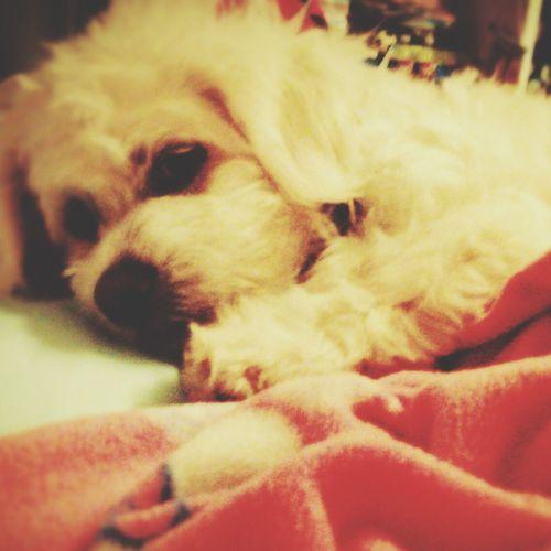 My puppy!!???