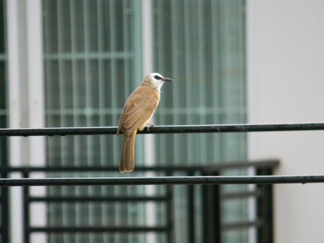 Bird Day Nature No People One Animal Outdoors Perching