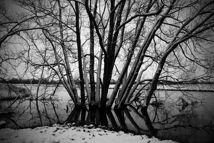 Somerset England WoodLand Bare Tree Beauty In Nature Blackandwhite Branch Cold Temperature Day Forest Land Nature No People Outdoors Plant Scenics - Nature Tranquil Scene Tranquility Tree Tree Trunk Trunk Water Winter