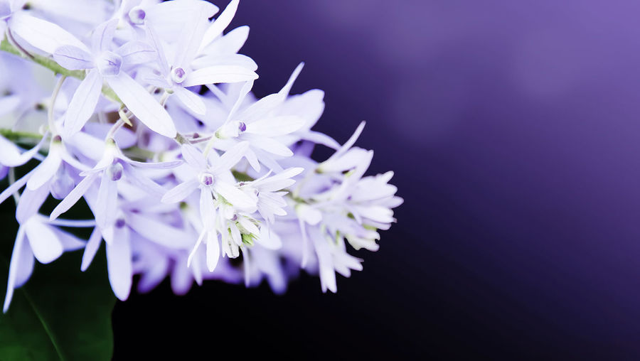 Beauty In Nature Blossom Botany Close-up Flower Flower Head Flowering Plant Fragility Freshness Growth Inflorescence Lilac Nature No People Petal Plant Pollen Purple Selective Focus Springtime Vulnerability
