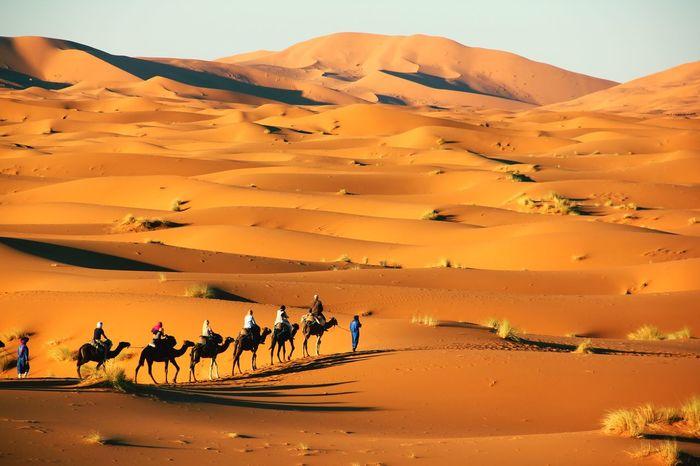 EyeEm Selects South Morocco Camel Desert Sand Dune Nomadic Lifestyle Nature Sand