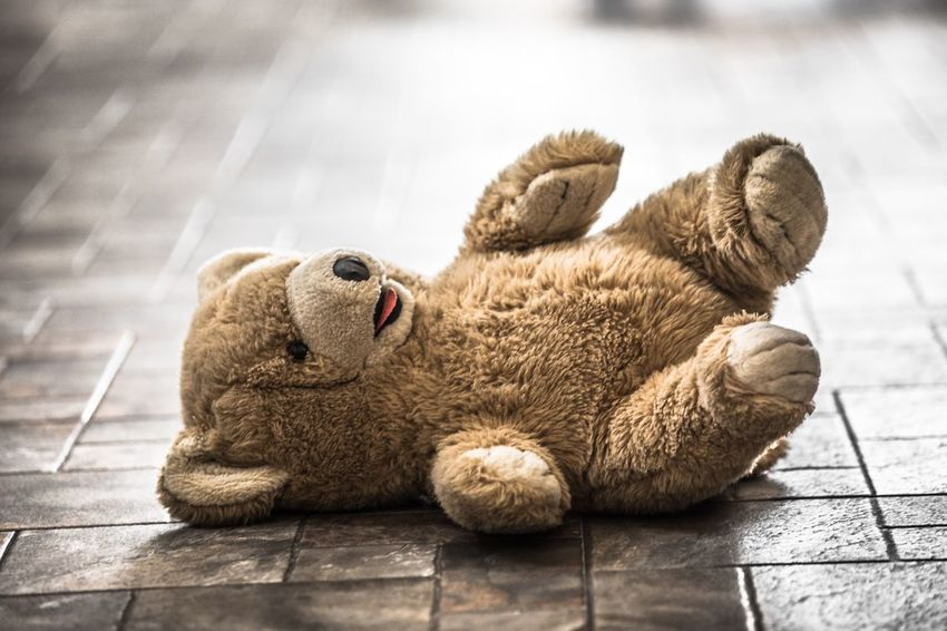 Technical Knock Out...! Teddy Bear Childhood Toystory Stuffed Toy Streetphotography Wildstyle