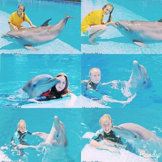 Dolphin Dolphins Mundomar Summer Advertising Advertisement