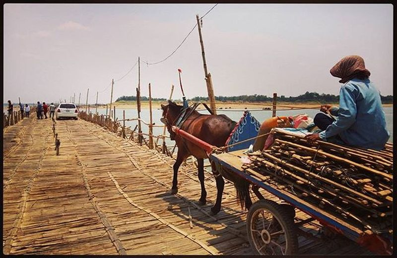 this Bridge that is built over Mekong River every year only for the dry season (demolished before the rainy season comes and built again the next year) connects Kampong Cham city to Koh Pen Island and is solely made of Bamboo 🎋 but it's so strong that not only people and motorcycles can cross, even cars and horse-carriages too! KampongCham Bamboobridge River Cambodia Authentic Nature Natureswisdom