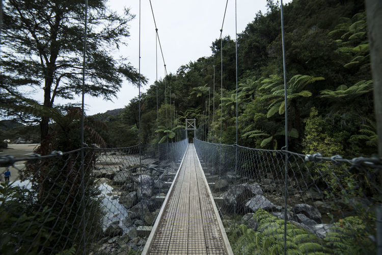 Swing Bridge in Abel Tasman National Park, New Zealand Abel Tasman Hiking National Park Swing Bridge Bridge Bridge - Man Made Structure Built Structure Cable Connection Day Footbridge Forest Growth Land Nature New Zealand No People Outdoors Rope Scenics - Nature Suspension Bridge Symmetry The Way Forward Tree