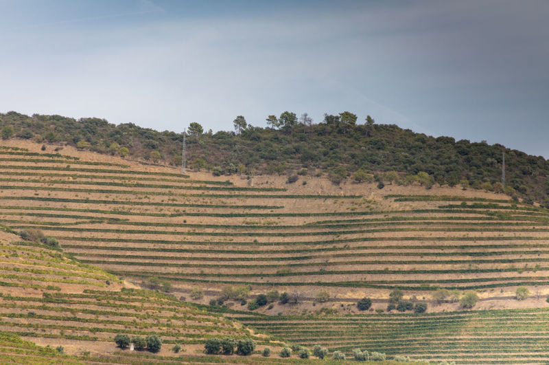 Vineyards on hills of Douro Valley Douro  Portugal Agriculture Beauty In Nature Crop  Day Environment Farm Field Growth Land Landscape Nature No People Outdoors Plant Plantation Rural Scene Scenics - Nature Sky Tranquil Scene Tranquility Tree Vineyard