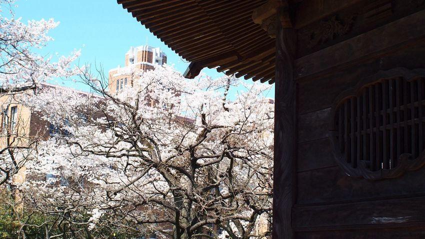 八卦堂 Japan Architecture Photowalk CanonFD  #oldlens