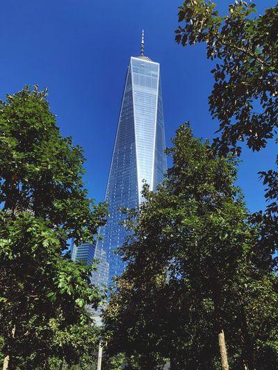 Tree Architecture Skyscraper Low Angle View Modern Tall - High Built Structure Tower Building Exterior Day Growth Travel Destinations Sky No People Blue Outdoors City Clear Sky Nature