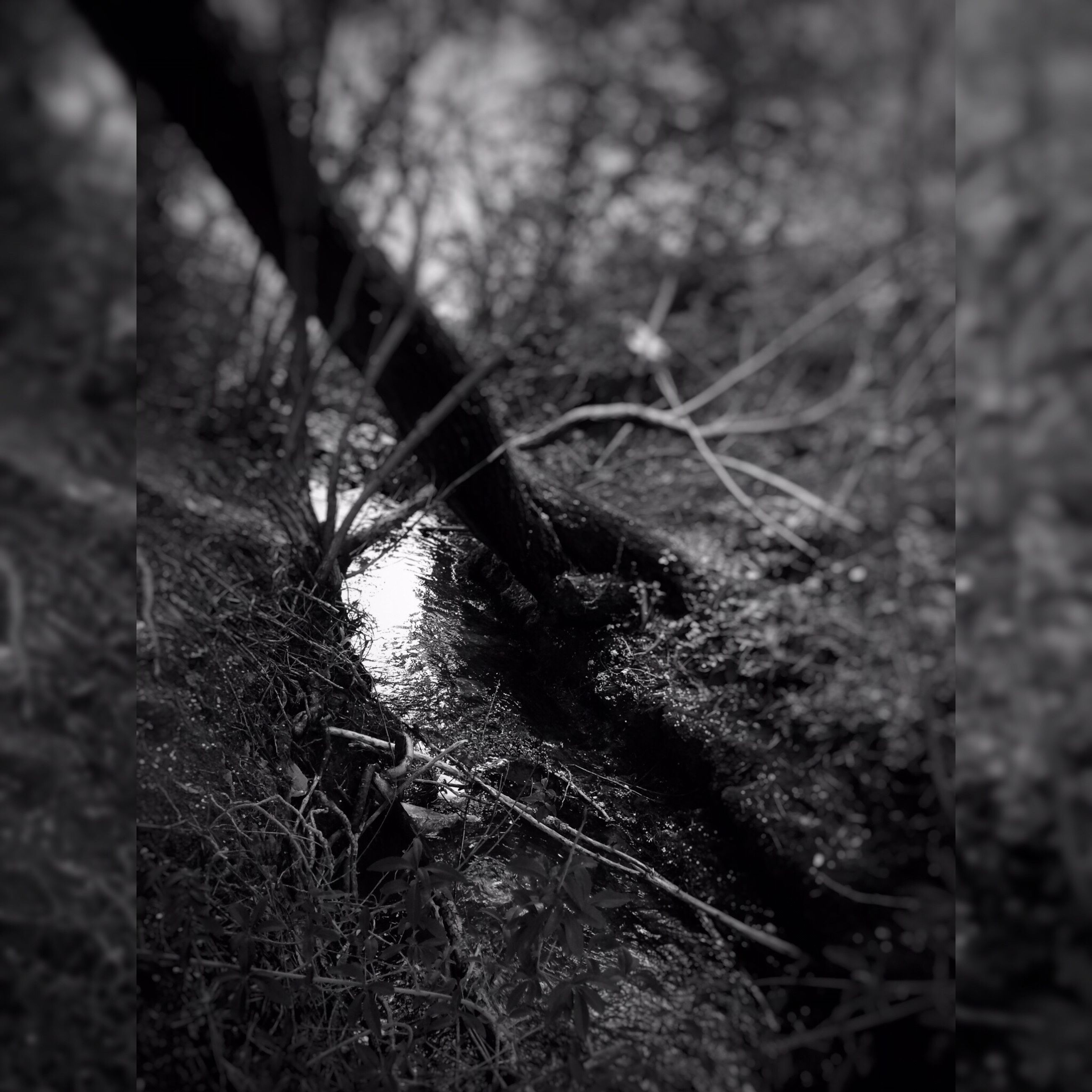 focus on foreground, close-up, growth, nature, tree, branch, forest, tree trunk, selective focus, plant, outdoors, day, twig, tranquility, dry, no people, beauty in nature, spider web, field, dead plant