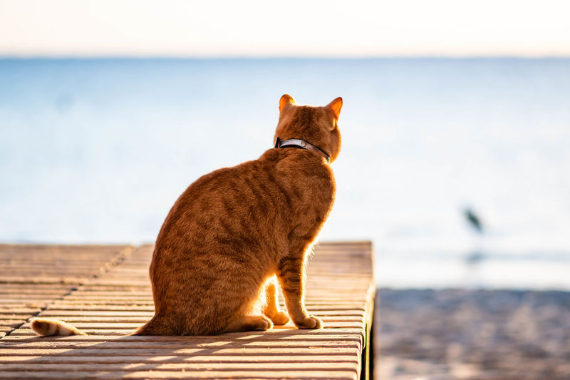 Cat watching a heron from a wooden bank at a beach