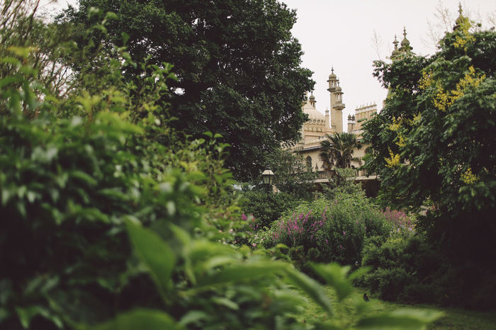Beauty In Nature Brighton Close-up Day Focus On Foreground Green Green Color Growing Growth Lush Foliage Nature No People Outdoors Plant Royal Pavilion Royal Pavilion Gardens Selective Focus Sky Tranquility Tree