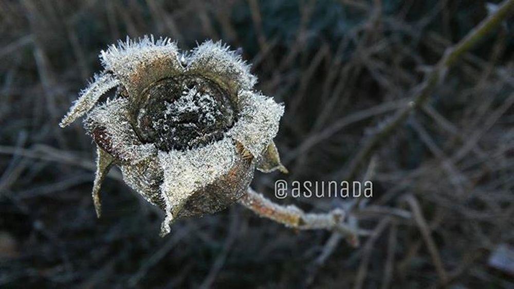 Amanecer de la Naturaleza Helada de la Galiciamaxica AsunAdá