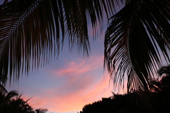 Sunset Sunset In Cuba Sunset_collection Palm Tree Night Palm Tree No People Sky Silhouette Nature Star - Space Outdoors Beauty In Nature Star Trail Close-up Tree In Cuba Canon EOS 5D MarkIII Travel Photography Summer Vacations Cuba Collection Idyllic Cuba Varadero Purple Sky