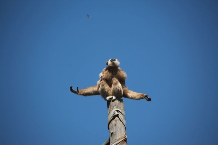 totem of monkey... Meditation Monkey Totem Pole Totem Animal Animal Themes Zoo Zoo Animals  Blue Clear Sky Full Length Portrait Closing Sky