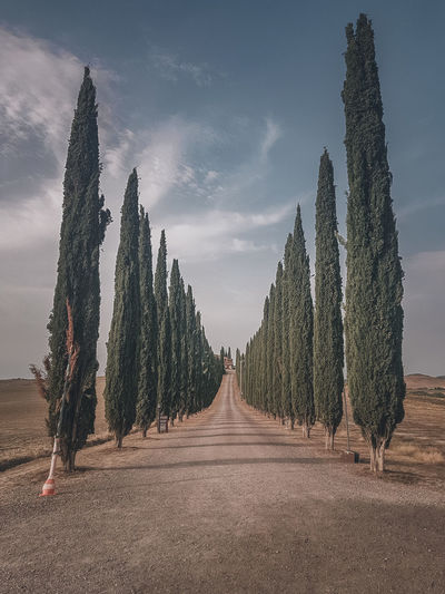 Panoramic view of empty road amidst trees against sky