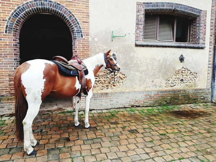 Horse Stable Door Stables Stable Yard