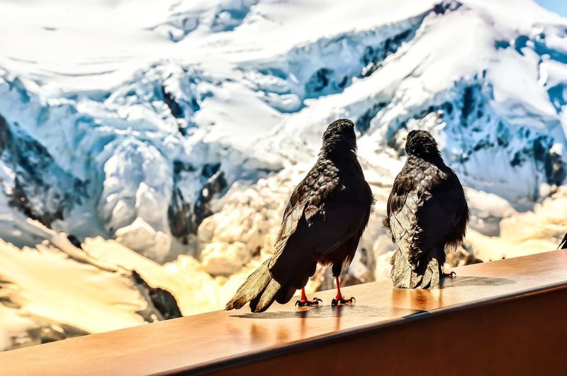 View of birds perching on snowcapped mountain