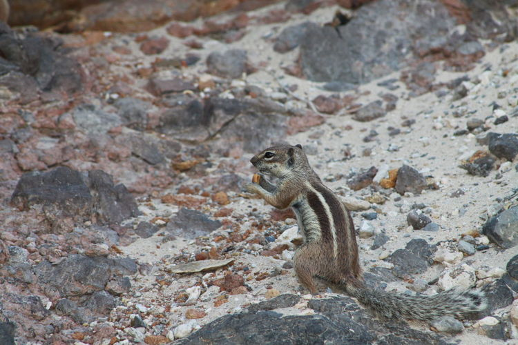 High angle view of squirrel on rock