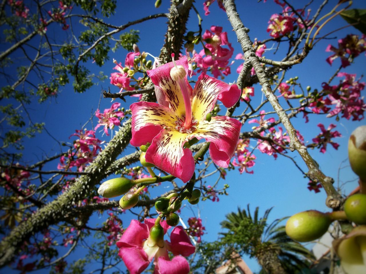 flower, low angle view, tree, growth, branch, fragility, beauty in nature, nature, freshness, blossom, magnolia, springtime, day, no people, petal, outdoors, flower head, leaf, sky, close-up, blooming, clear sky